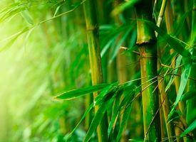 Bamboe dekbed